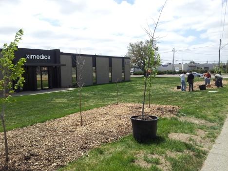 Ximedica trees 2